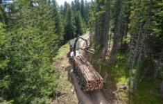 Den Wald auf den Klimawandel vorbereiten!